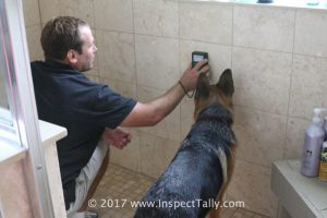 A dog follows the home inspector during a Tallahassee home inspection, prepare your home by securing all pets